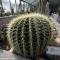 Serra delle piante succulente