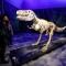 Scheletro di dinosauro - 80.020 pezzi