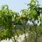 Parco Pietro Mennea, un grande parco pubblico dello sport e della frutta