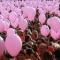 L\'onda rosa contro il cancro